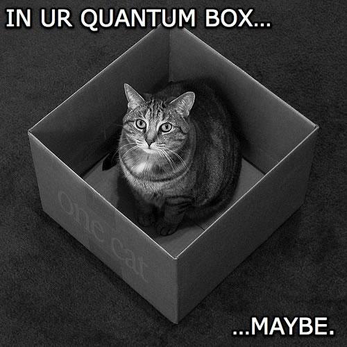 Schrodinger's LOLcat: 'I'm in ur box...maybe.