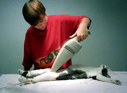 La Shinda Clark's photo of a boy vaccuming a cat with a Dustbuster
