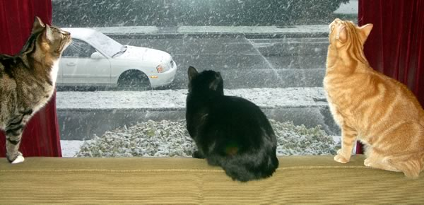 Cats at a snowy window