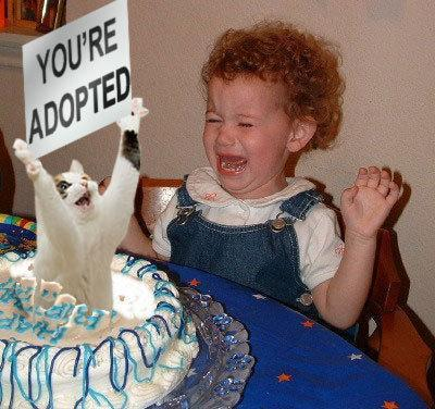 "Cat jumping out of birthday cake holding sign that says ""You're Adopted"""