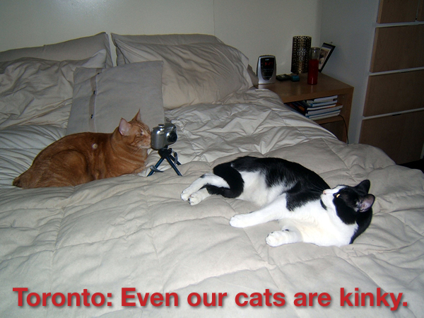 "Two cats on a bed, one photographing the other\'s rear end: ""Toronto: Even our cats are kinky.\"""
