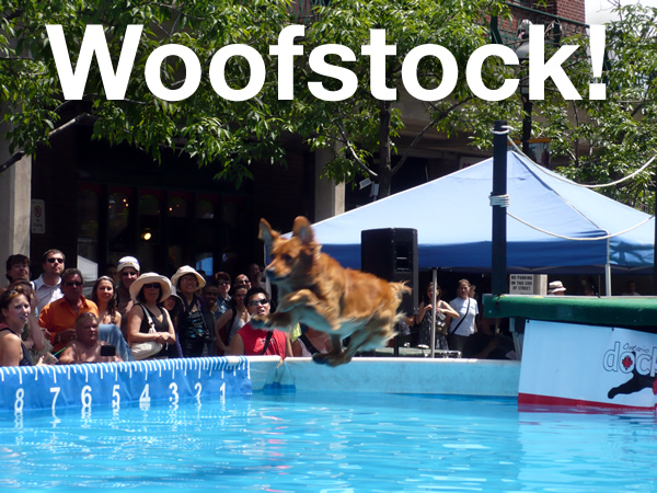 """Woofstock!\"": A dog diving into a giant pool set up for the dog-diving competition at Woofstock."