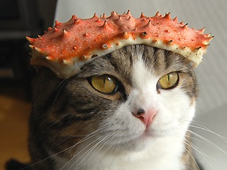Cat wearing a crab shell as a hat