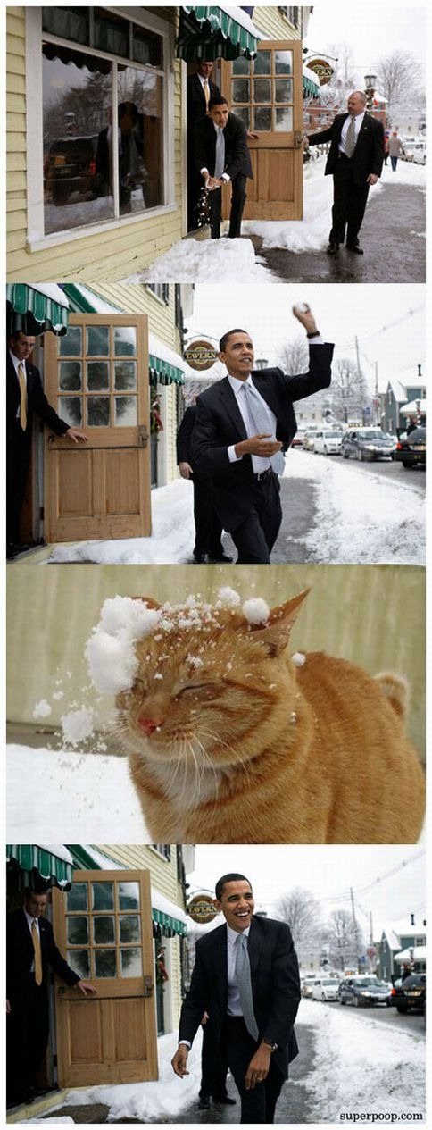 Photo-comic of Obama hitting a cat with a snowball
