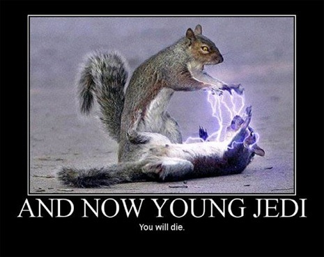 "Inspirational poster parody featuring one squirrel killing another with Force lightning: ""And now young Jedi, you will die."""