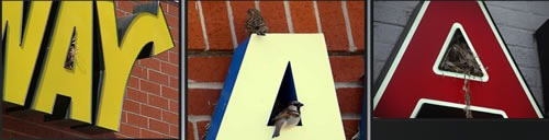 "Birds nesting in the letter ""A"" in signs"