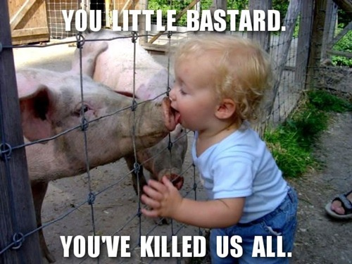 "Kids licking a pig on its snout: ""You little bastard. You've killed us all."""