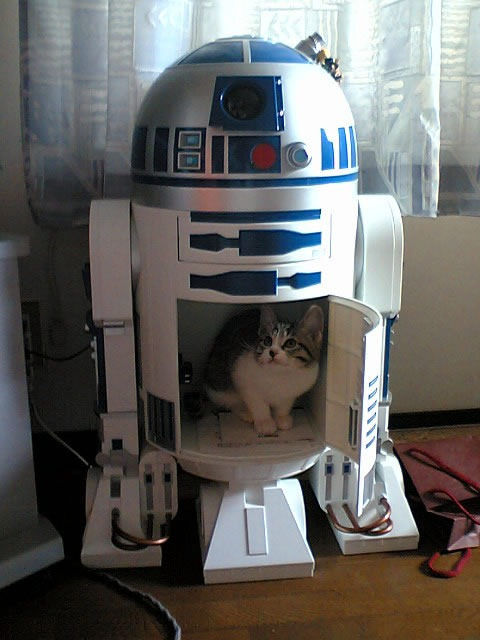 r2-d2_with_cat_inside