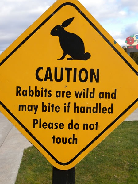 03 rabbits are wild