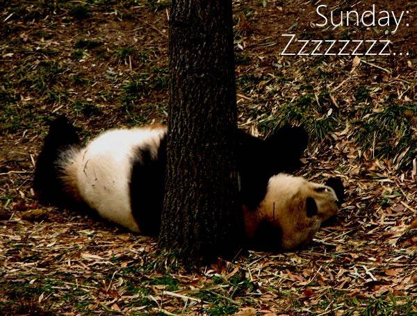 sunday - zzzzz
