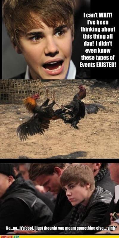 bieber cockfight