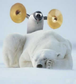 Penguin sneaking up on a sleeping polar bear with a pair of cymbals