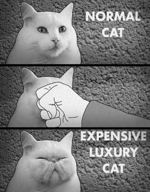 """Three-panel picture: 1. """"Normal Cat"""" - a white cat.  2. Cat getting punched in the face.  3. """"Expensive Luxury Cat"""" - a """"punch face"""" Persian cat"""