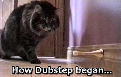How dubstep began: Cat playing with spring doorstop