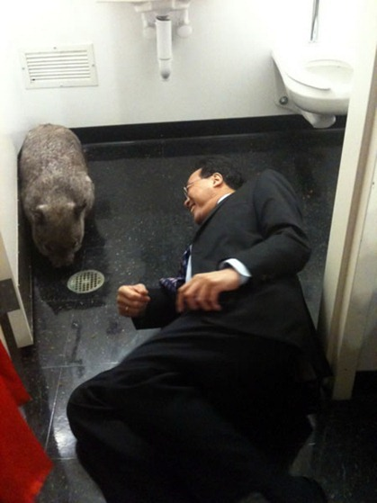 yo yo ma and wombat