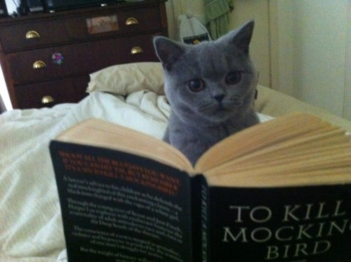 "Cat reading ""To Kill a Mockingbird"""