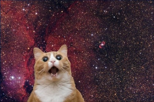 Mind-blown cat against a background of stars