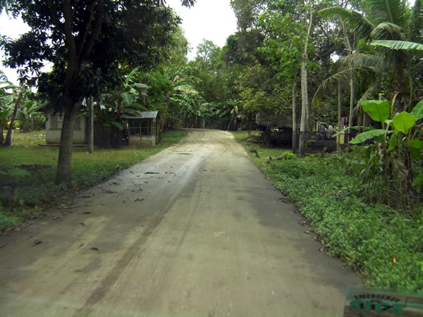 Dirt road leading to the entrance of Bohol Bee Farm