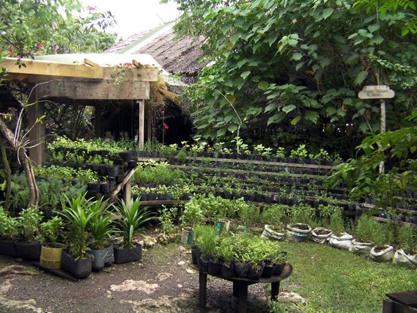 Herb garden at Bohol Bee Farm
