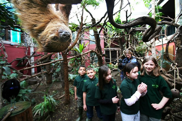 Photo of children on school trip, with sloth hanging in foreground