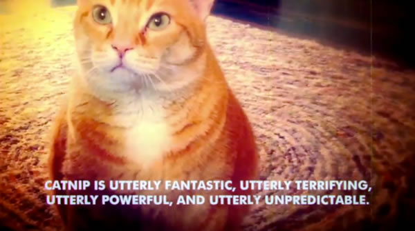 "Spaced-out cat: ""Catnip is utterly fantastic, utterly terrifying, utterly powerful and utterly unpredictable"""