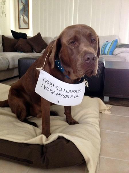 more dog shaming