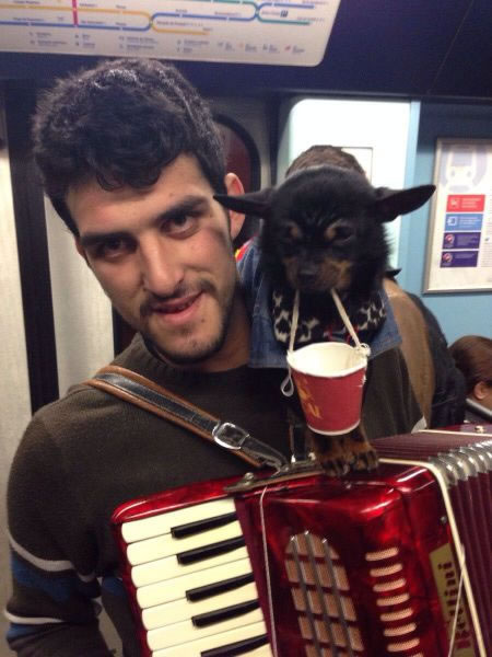 accordion helper dog 1
