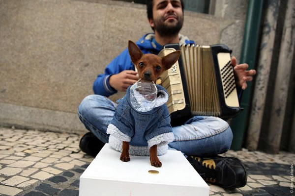 accordion helper dog 2