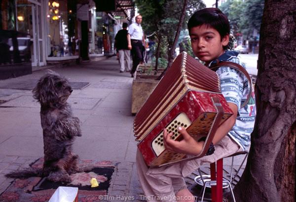 accordion helper dog 4
