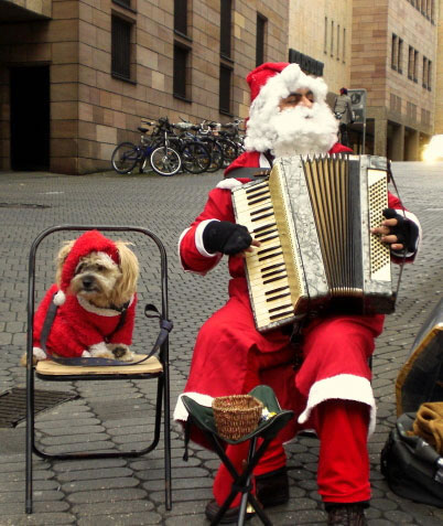 accordion helper dog 5