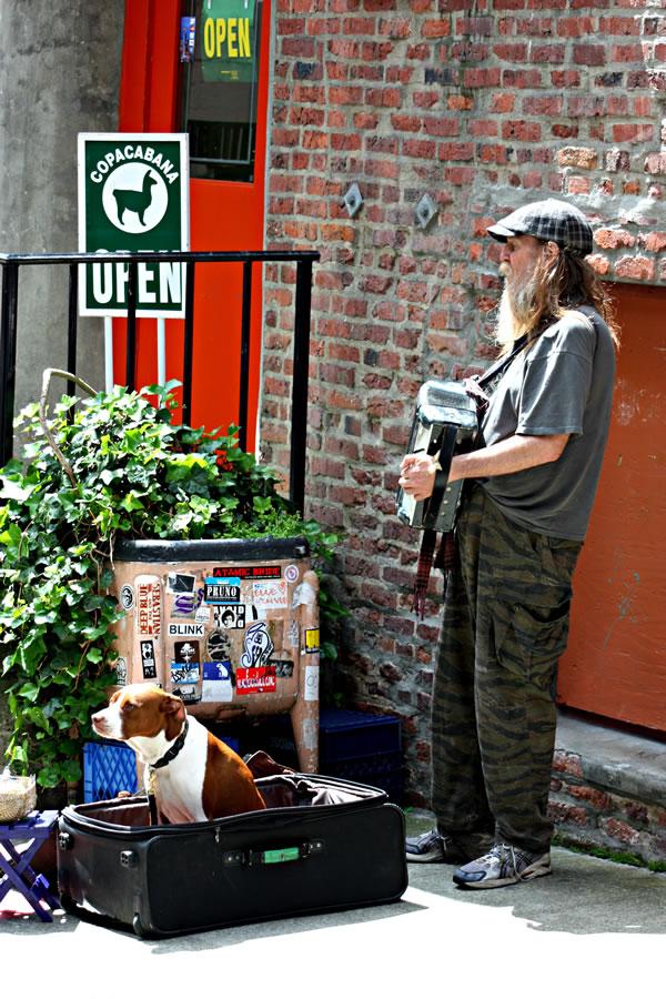 accordion helper dog 6