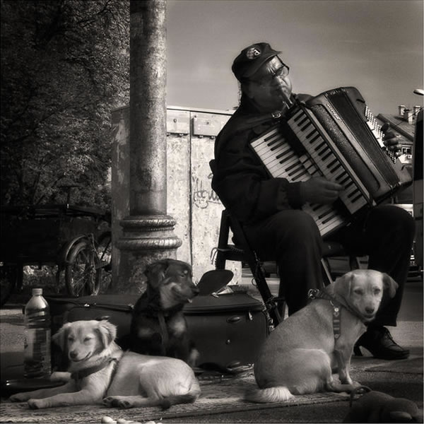 accordion helper dog 7
