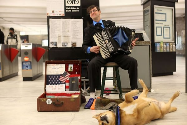 accordion helper dog 8