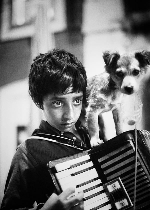 accordion helper dog 9