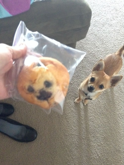 dog face in blueberry muffin