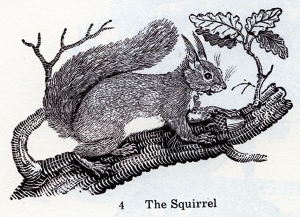 """The squirrel"": Woodcut illustration of a squirrel on a tree branch."