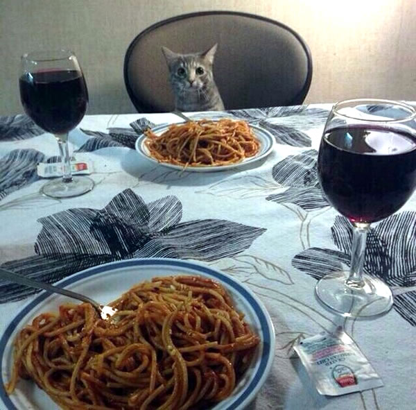 dinner with kitty