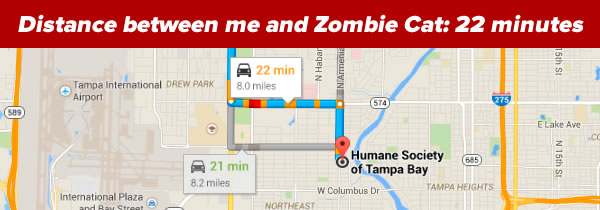 distance between me and zombie cat
