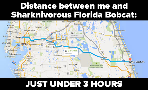 Headline: Distance between me and Sharknivorous Florida Bobcat: JUST UNDER 3 HOURS / Image: Google Map showing route from Tampa to Vero Beach