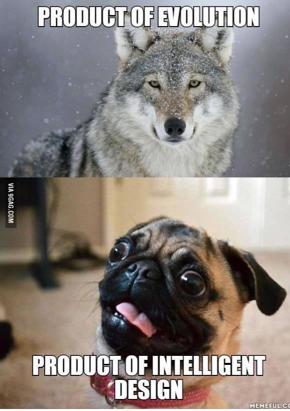 evolution vs intelligent design