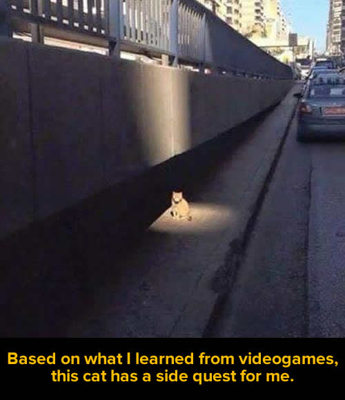 cat side quest