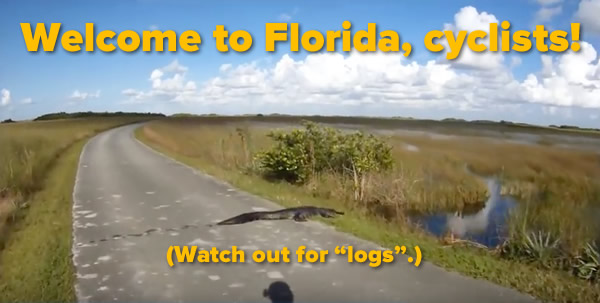 """Welcome to Florida, cyclists! Watch out for 'logs'."": Still frame from a cyclist's-view video, showing alligator resting in the middle of the road."
