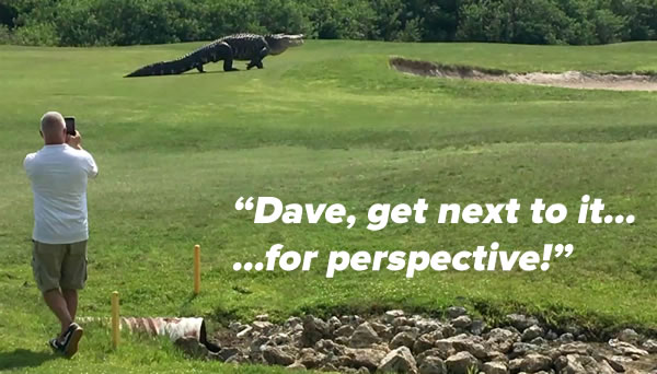 dave and the alligator