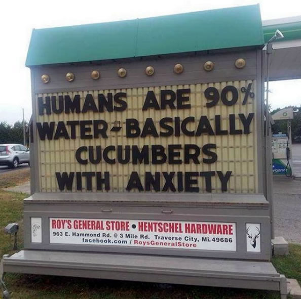humans basically cucumbers with anxiety