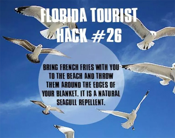 """Picture of seagulls in flight with text: """"Florida Tourist Hack #26: Bring french fries with you to the beach and throw them around the edges of your blanket. It is a natural seagull repellent."""""""