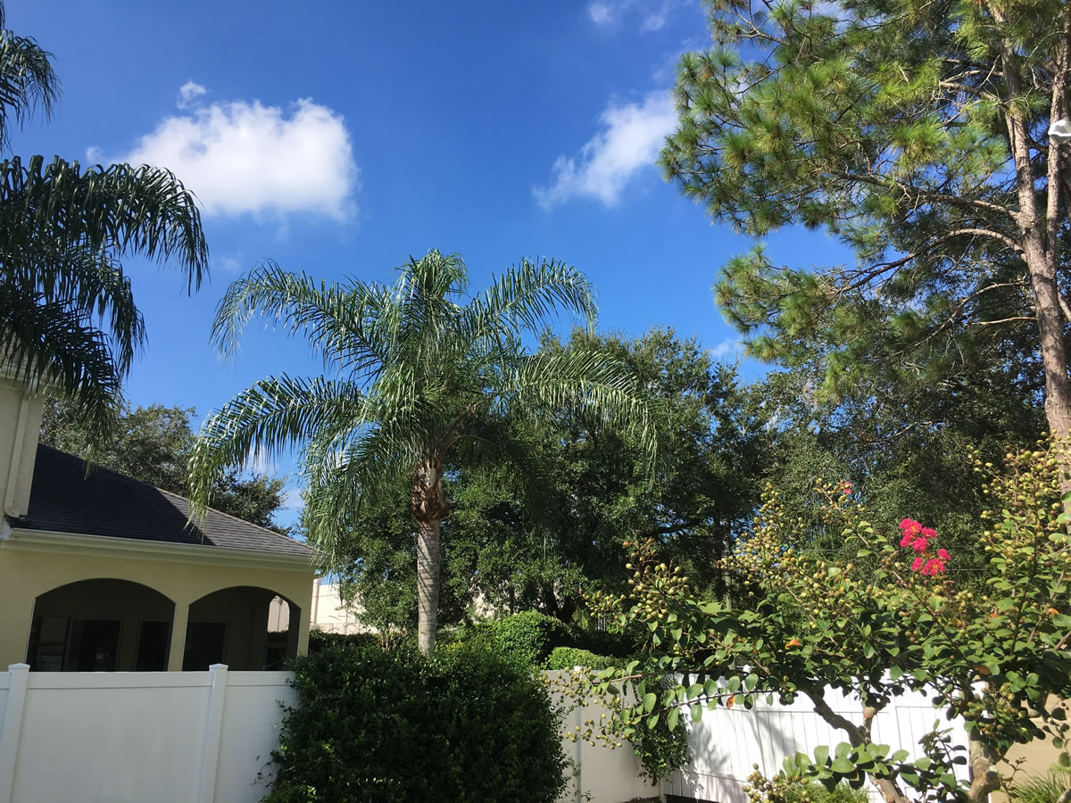 Sunny skies, as seen from Anitra and Joey's yard, Carrollwood, Tampa.