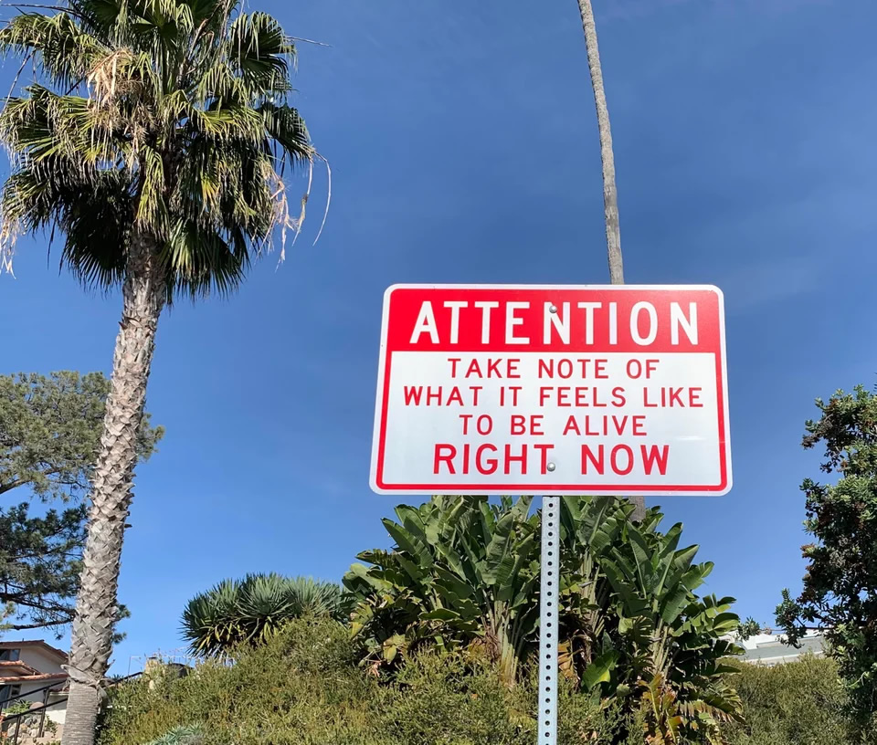 Sign in front of background with palm tree and other tropical foliage: 'ATTENTION: Take note of what it feels like to be alive RIGHT NOW'.