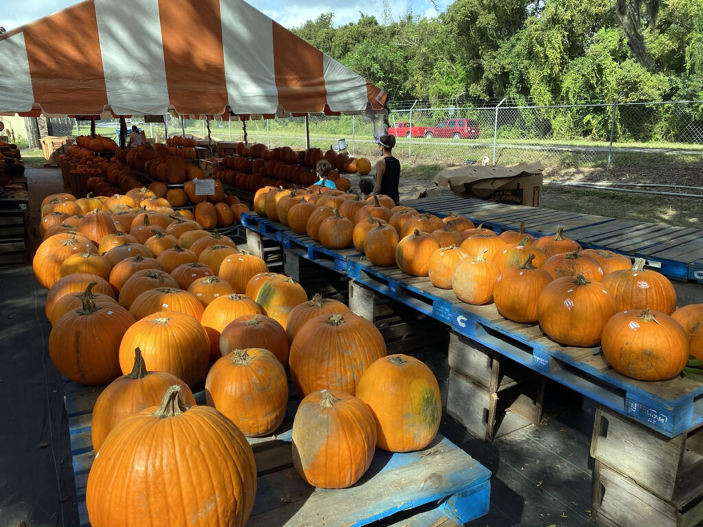 Photo: Pumpkin stands at Bearss Groves