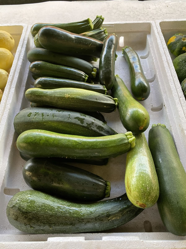 Photo: Green zucchini at Bearss Groves