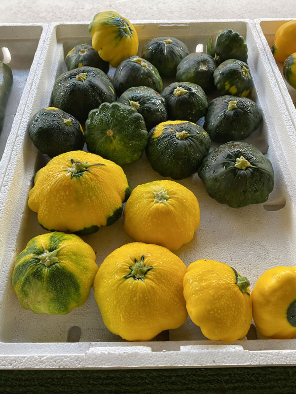 Photo: Patty-pan squash at Bearss Groves